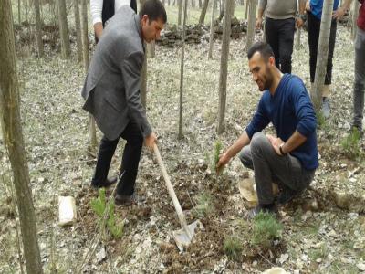 Zara Belediye Başkanı Fatih Çelik, Başbuğ Alparslan Türkeş Hatıra Ormanına çam ağacı dikme çalışmalarına katıldı.